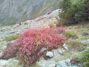 高山の植物